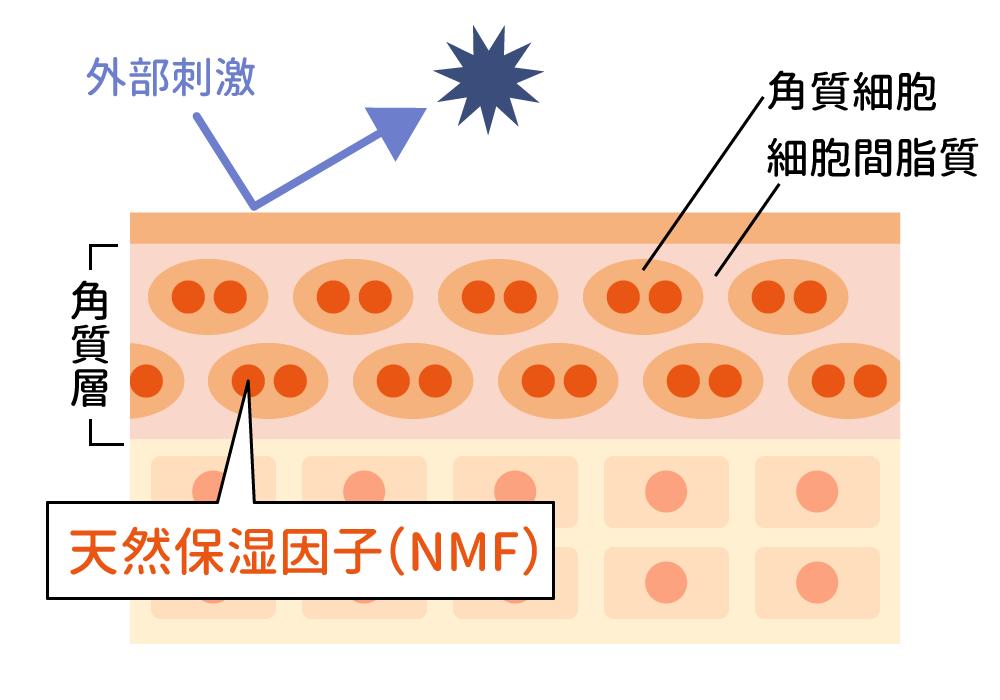 肌の角質層の仕組み
