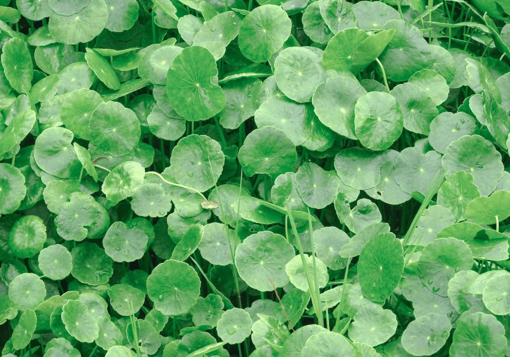 植物の葉っぱイメージ